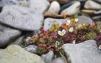 Flowers Growing Between the Rocks
