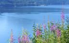 Flowers at Boknafjord