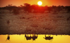 Sunset and watering hole in Africa