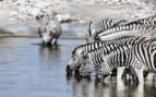 Zebra in the Lower Zambezi National Park