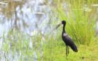 Birds of Zambezi