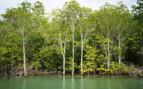 Mynamar mangroves