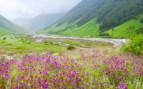 Flowers in Uttarakhand