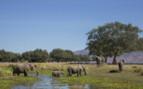 Elephant Heard Crossing