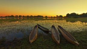 Canoes, Okavango Delta, Botswana