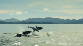 Dolphins, New Zealand
