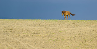 A horse wandering through the Gobi desert