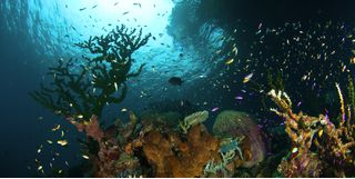 Picture of Deacon's Reef at Milne Bay