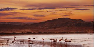 Flamingos at Skeleton Coast