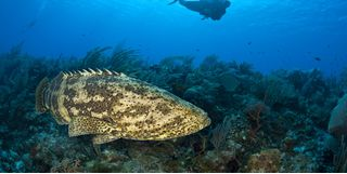 Picture of diving Bloody Bay Wall in Little Cayman