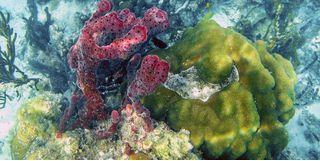 Barrier reef in Belize