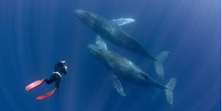 Diving with whales