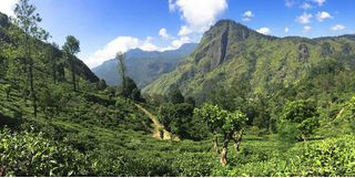 Tea Country Landscape, Sri Lanka