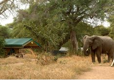 Wildlife at Mdonya Old River Camp, luxury camp in Tanzania