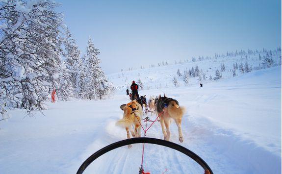 Huskies pull the ride