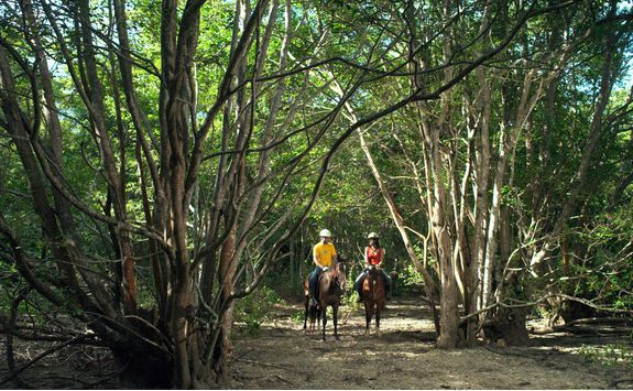 Horse riding at The Menjangan