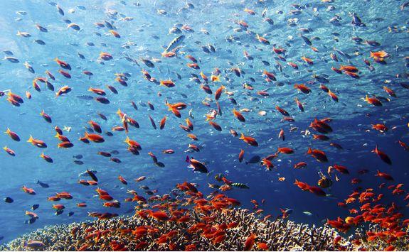 Underwater world, Menjangan Island