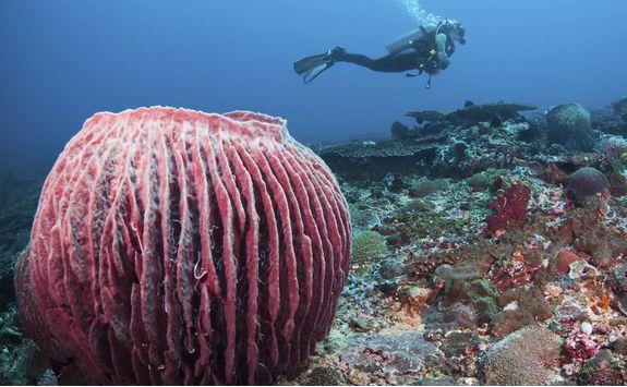 Diving in Menjangan Marine Park