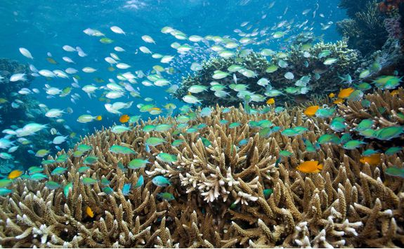 Coral reef near Pemuteran, Bali
