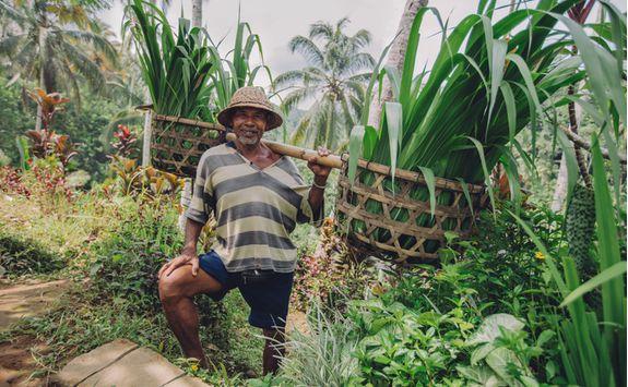 Rural Farmer, Indonesia