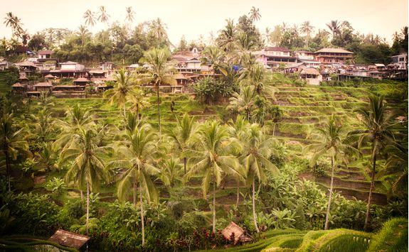 a rice plantation village in Bali