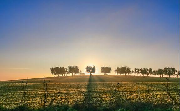 Countryside in Puglia