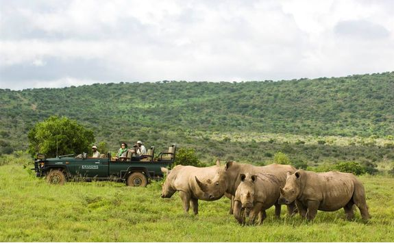 Rhinos in Kwandwe Private Game Reserve