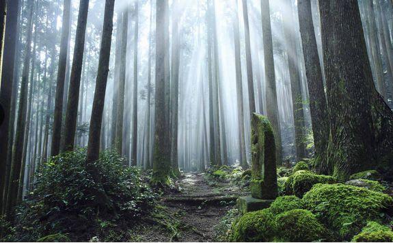 Kumano Kodo trail and shrine