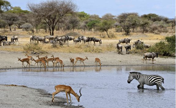 A watering hole in Selous