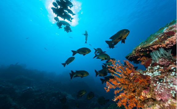 Coral reef and fish in Komodo