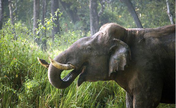 elephant in nagarhole national ark