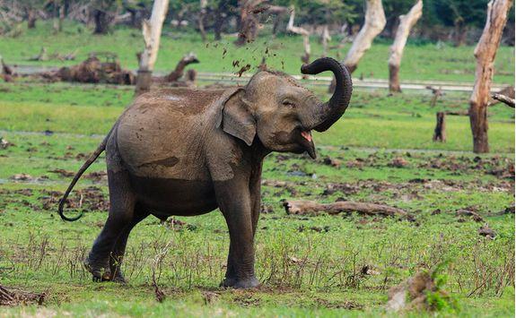 chena huts elephant