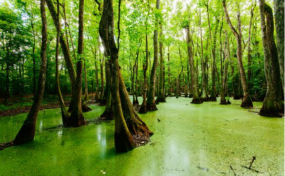 swamps in louisiana