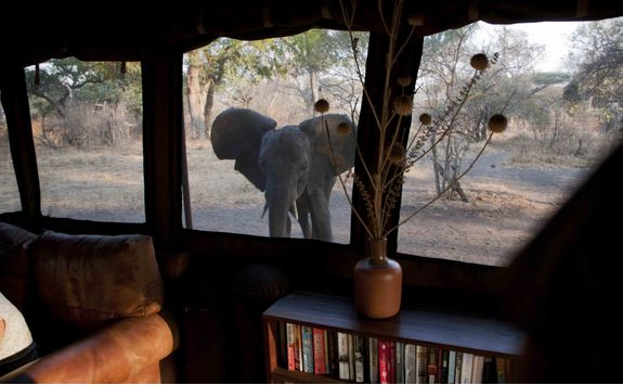 An elephant at camp window