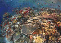 Coral Reef, Komodo