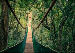 Plettenberg jungle bridge through canopy