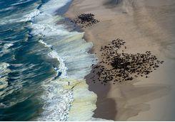 Seal Colony, Skeleton Coast