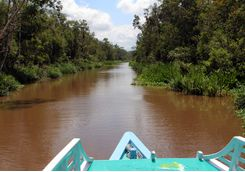 Tanjung Puting National Park river