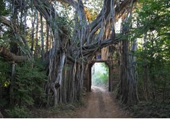 Ranthambore national park tree gate