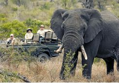on safari seeing an elephant