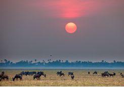 buffalo at sunset in Katavi