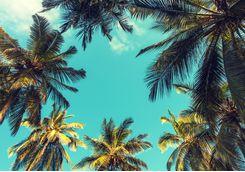 Palm trees in Tanzanian Coast