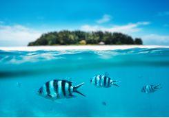 Snorkelling fish underwater