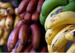 Exotic bananas in Zanzibar