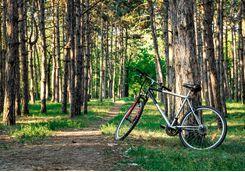 iStock_695239962_Day_12_Cycling_Oak_Bluff