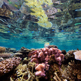 Picture of stunning coral in Fiji