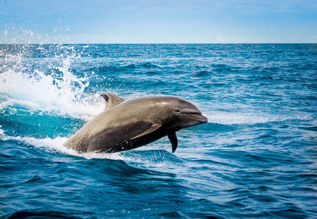 Фото: Галапагосские острова, Эквадор