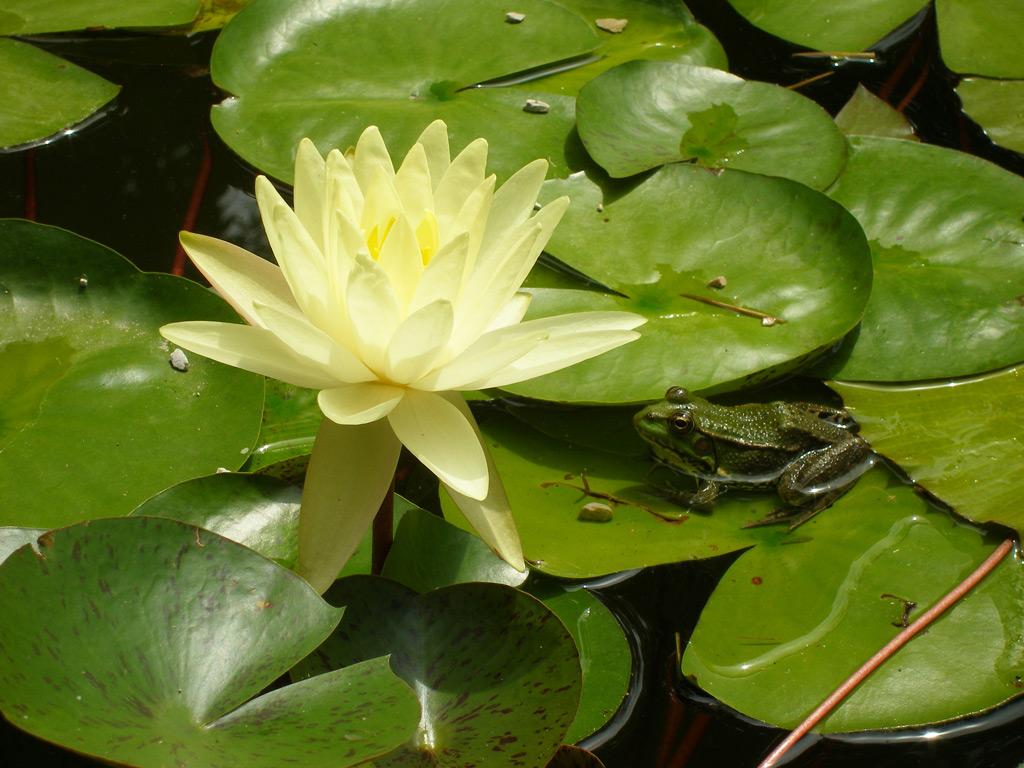 Фото: Сухумский ботанический сад