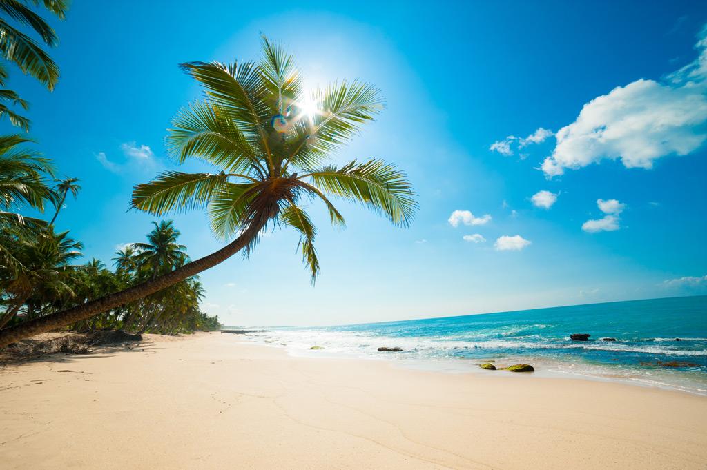Фото: Нетронутый тропический пляж