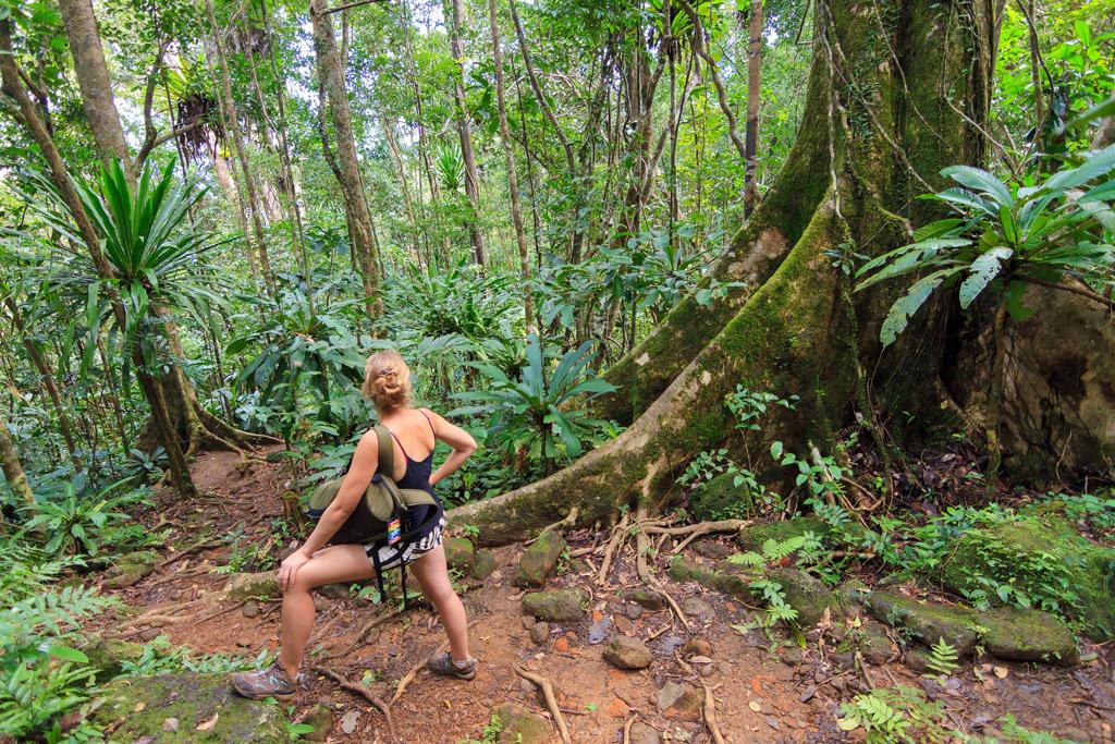 Фото: Мадагаскарские леса